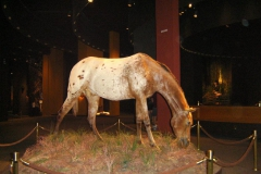 Arch Museum horse